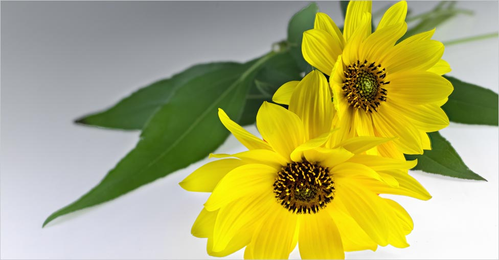 arnica benefits for hair
